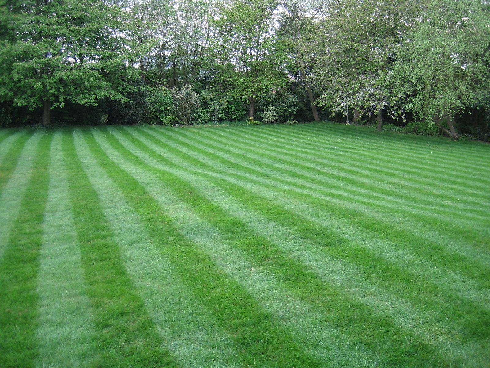 Professional Lawn Maintenance in Whippany NJ